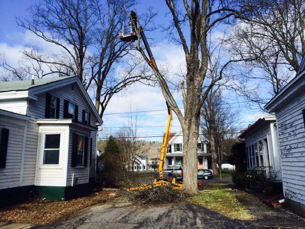 tree-removal-hobart-ny